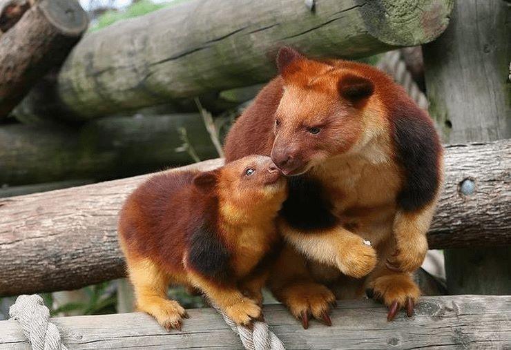 15 poze cu animale incredibile – nici nu am banuit ca asa ceva poate sa existe pe Terra!