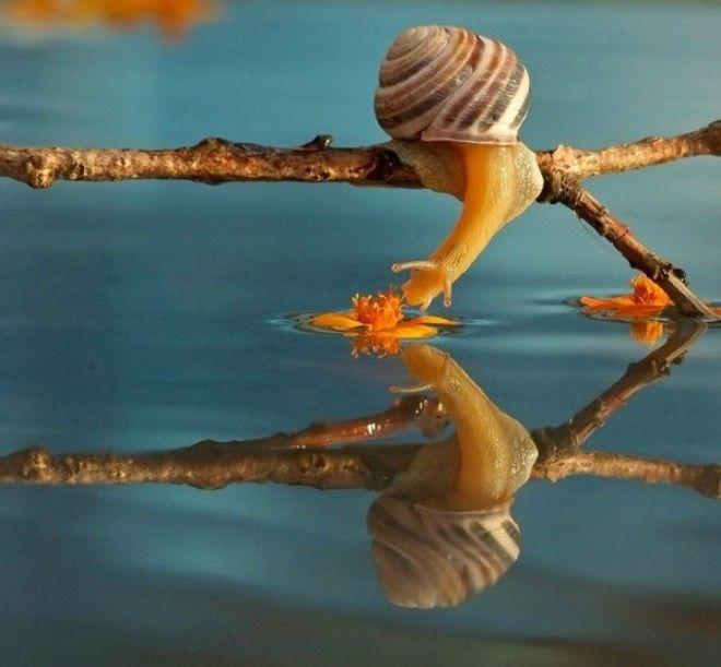 13 poze fabuloase in regim macro! Vezi viata in cele mai mici detalii…